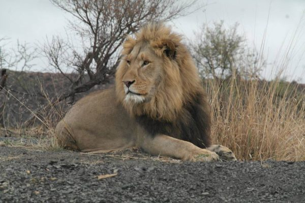 south africa game drive
