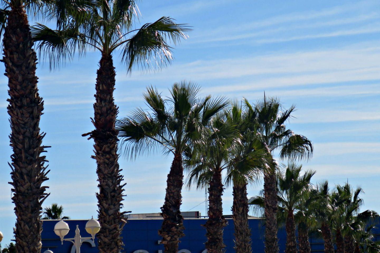spain palm trees
