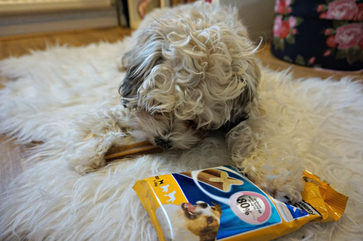 dentastix review