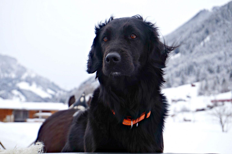 mamba snow dog zugspitz
